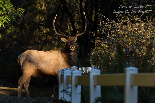 It's not hunting season but these critters can be shot at by photographers!  Terry Smith photo