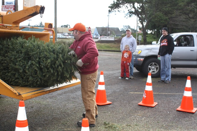 Christmas Tree Mulching Atonement Lutheran Church Across from Safeway in Newport