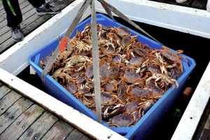 Crab off the dock can go for as little as a buck-98 or as much as 9 bucks or more...it's the roll of the dice on quality, quantity and world market prices.