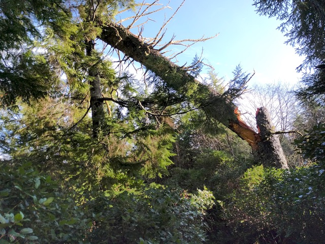 Mike Miller Park Partial closure due to tree fatalities LC Parks photo