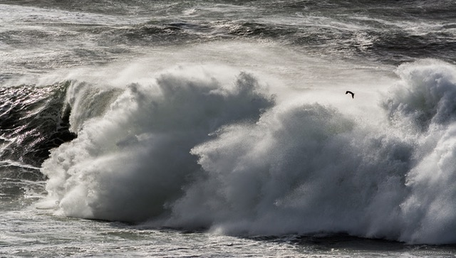A wave to watch from a great distance...like from the Yaquina Head Lighthouse! Greg Henton photo