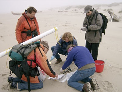 COASST Volunteers More needed to further big data base on status of coastal wildlife.  Courtesy photo