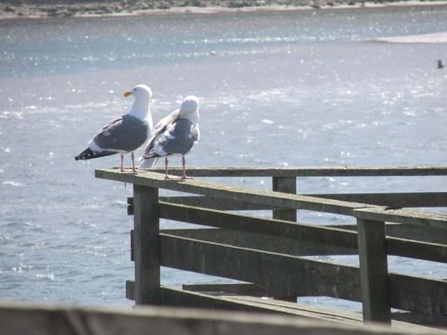 """The gull's seem so say...""""Oh goody, here they come..."""""""