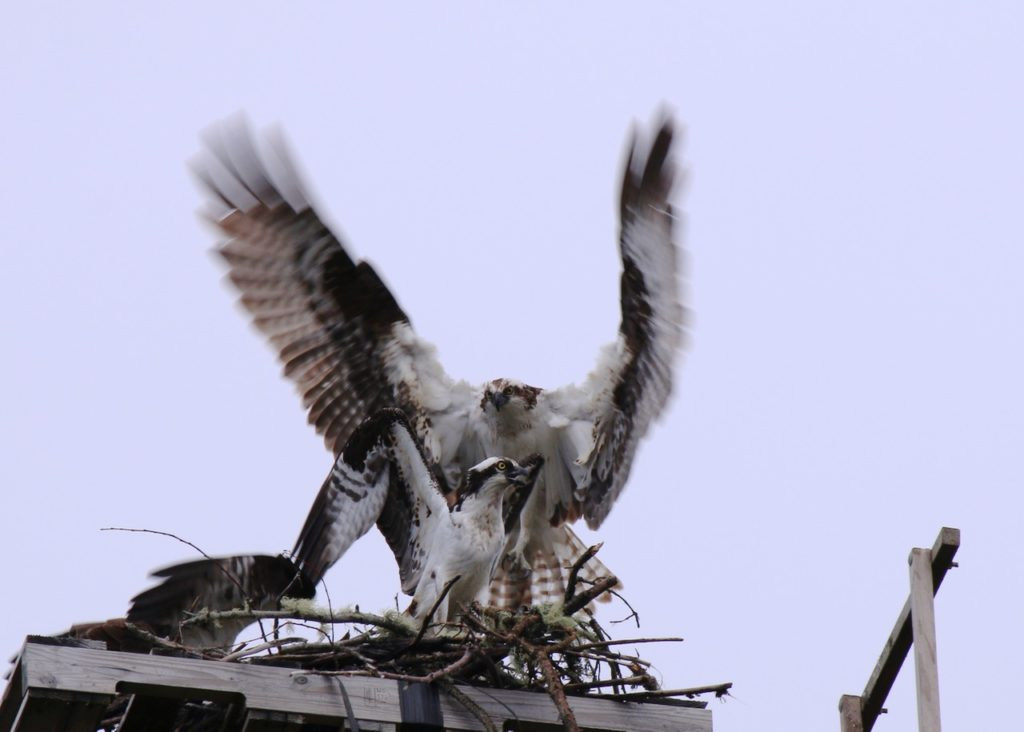 """""""Thanks for building the nest - I'll take over from here!!"""