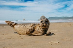 Baby seals are cute as a bug but LEAVE THEM ALONE.  DO NOT TOUCH THEM!