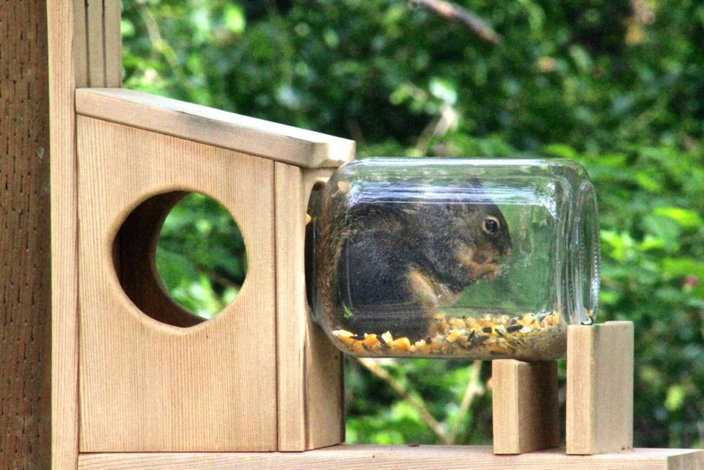 Fred the Squirrel up to his knees in munchies. Kevin Winters photo