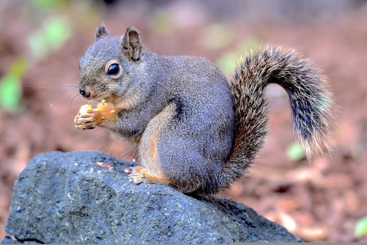 Hungry Squirrel by Ken Gagme/