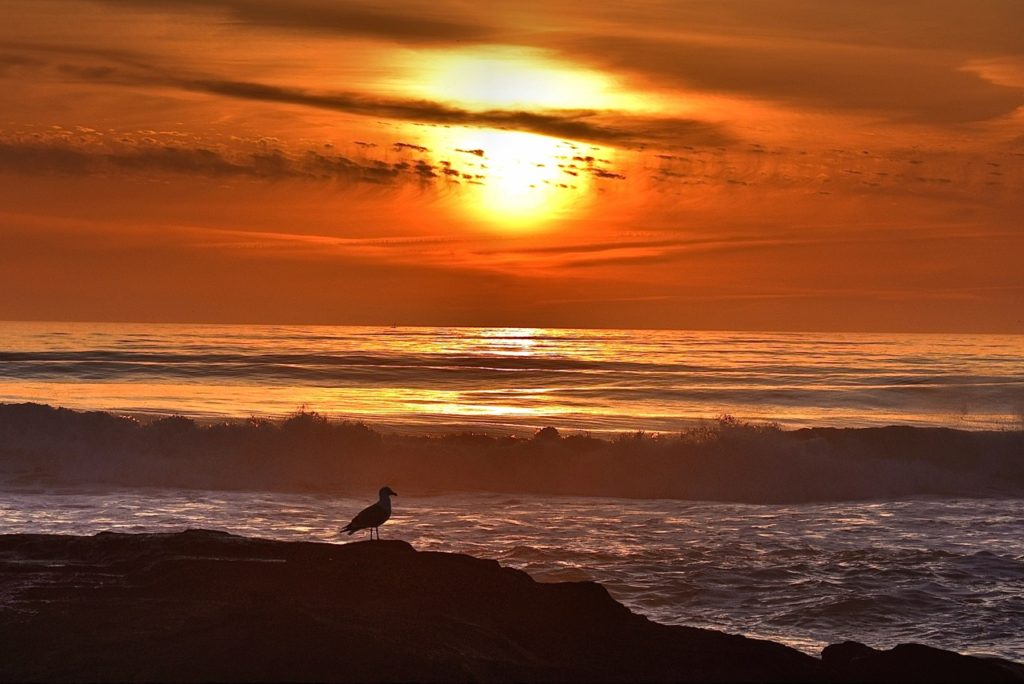 Jonathon L. Seagull reflecting on another day in paradise... Ken Gagne photo