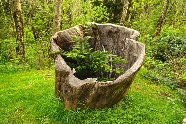 And a sprig growing inside a hollowed-out stump!