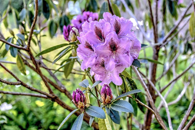 """This is what happens when Ken Gagne """"Hits the Rhodie..."""""""