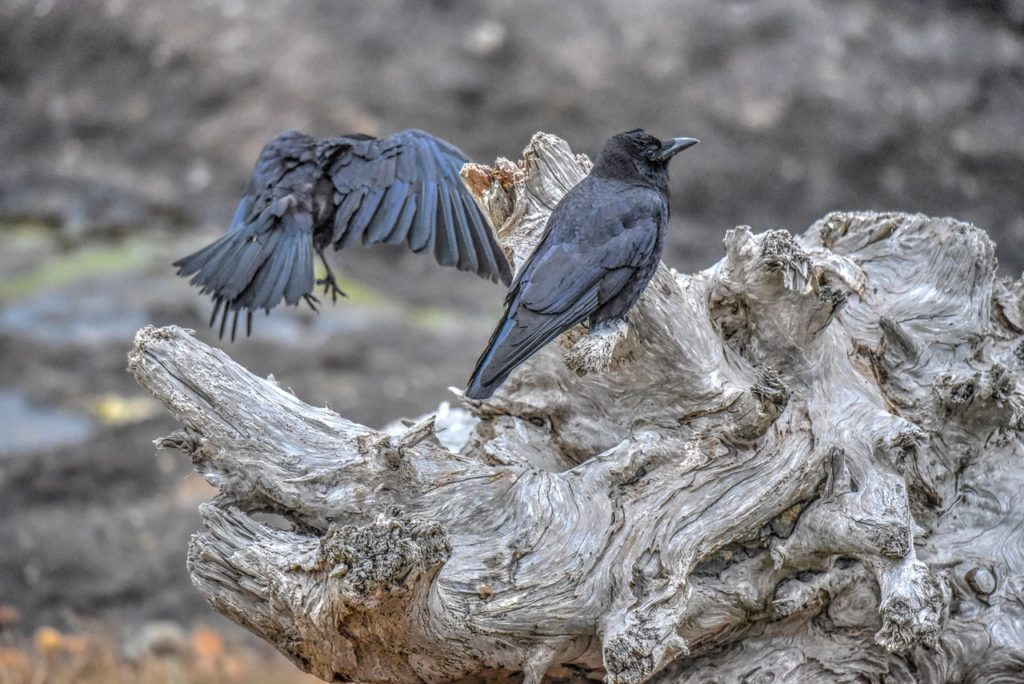 I don't care how much you flap your wings, I'm not talking to you!!