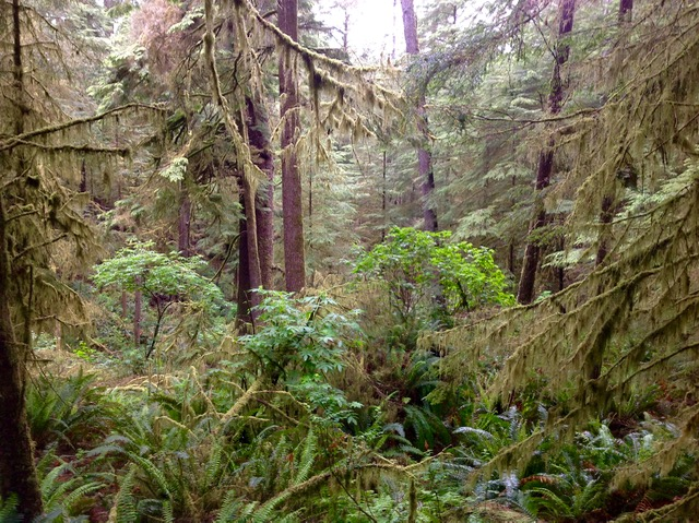 ...Larry Miller took this very coastal forest shot within Cape Perpetua...