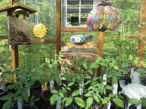 Plant sale next Saturday morning, at the Fairgrounds!