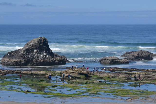 Seal Rock at low tide and the school kids love their field trip! Ken Gagne