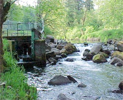 Kids aren t hatched but fish are come see the difference for Siletz river fishing report