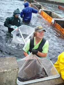 Volunteer Brad Monson and others netting adult salmon out of the Salmon River Hatchery trap in October 2015.  ODFW photo