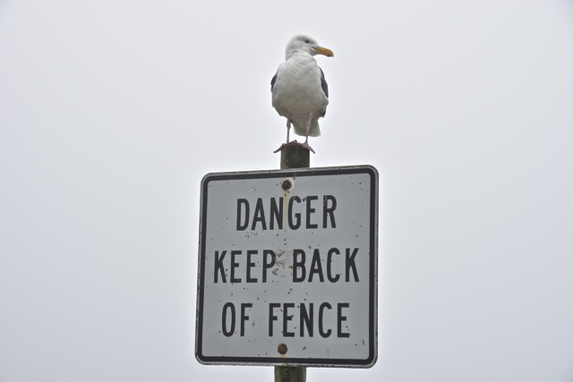 """Yet many visitors complain that he has the """"gull"""" to order people to stay back!"""