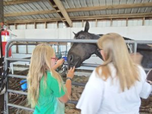 lincoln county fair with horse tom mock