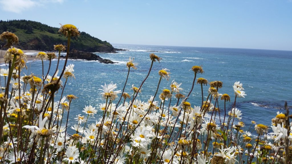 Daisies, sunshine and the sea... Pauline Morrison