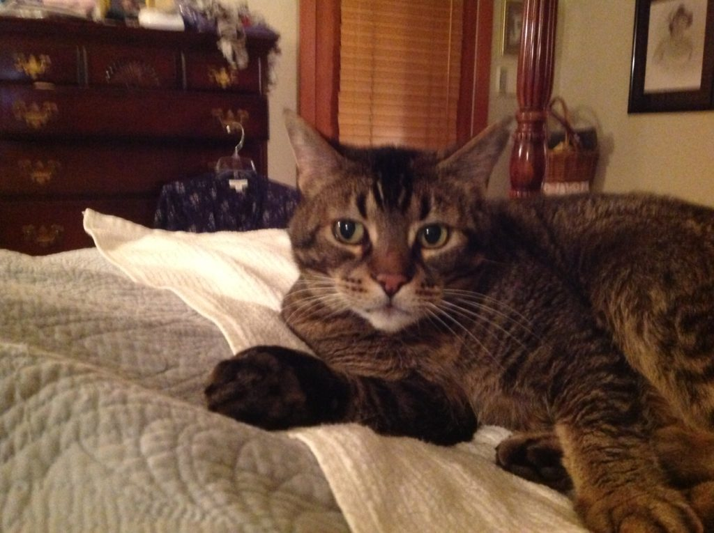 Cat went missing Friday in the Lincoln Beach area of Depoe Bay. He is a brown tabby with a notch in his left ear. He weighs about 14 pounds. My phone number is 253-405-9742.