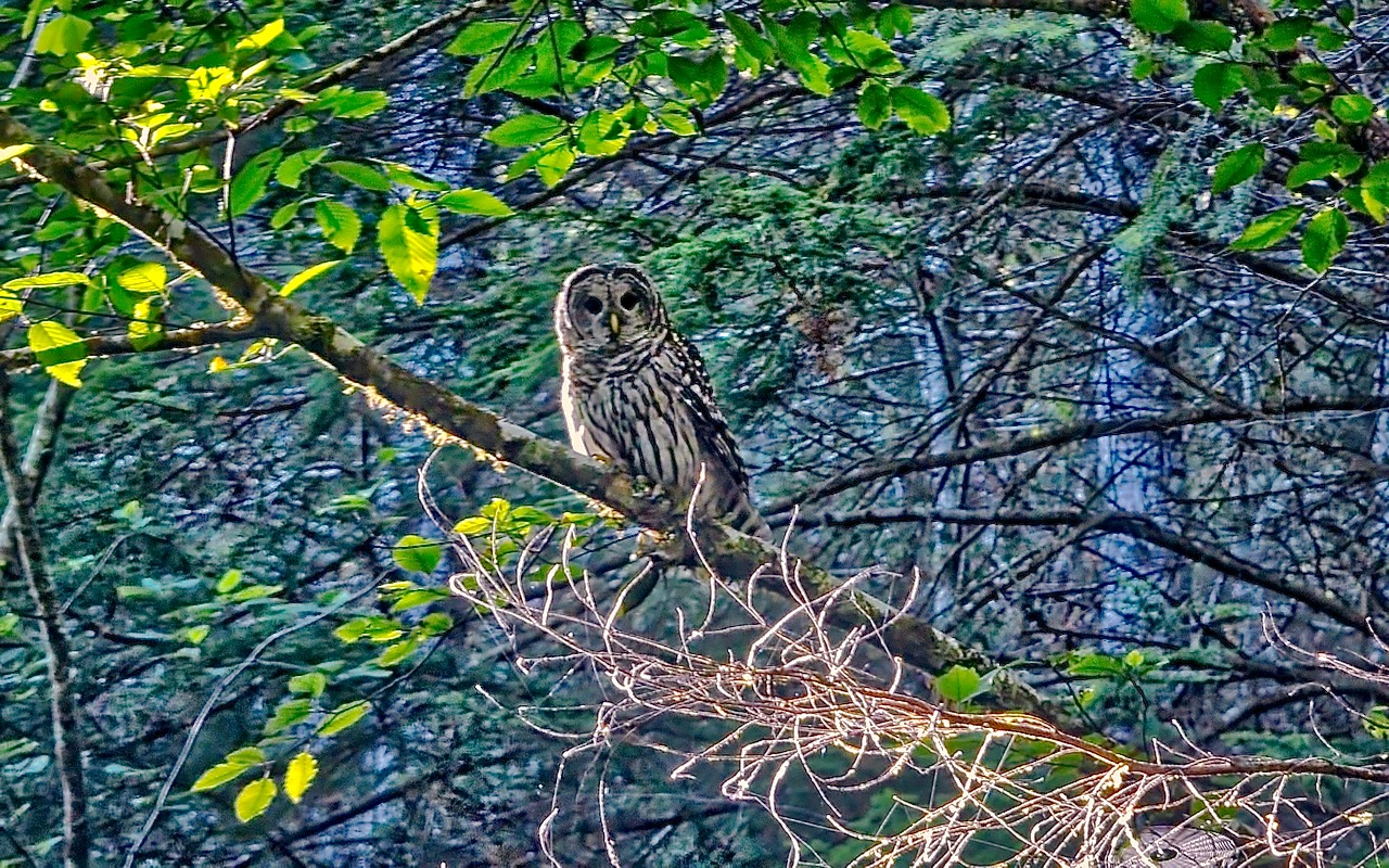 Who whooooooo is taking my picture news lincoln county for Alsea river fishing report