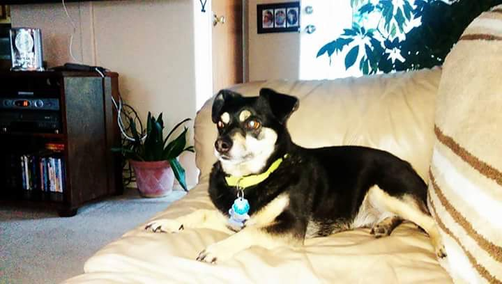 Lost doggie:  Last seen behind the Coast Guard Station in Depoe Bay.  If seen, please email:  LJGLPC@Live.com