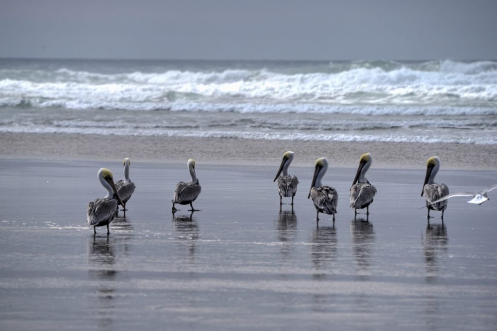 """""""Ok, Ok....we're outta here...there's always another beach...."""""""