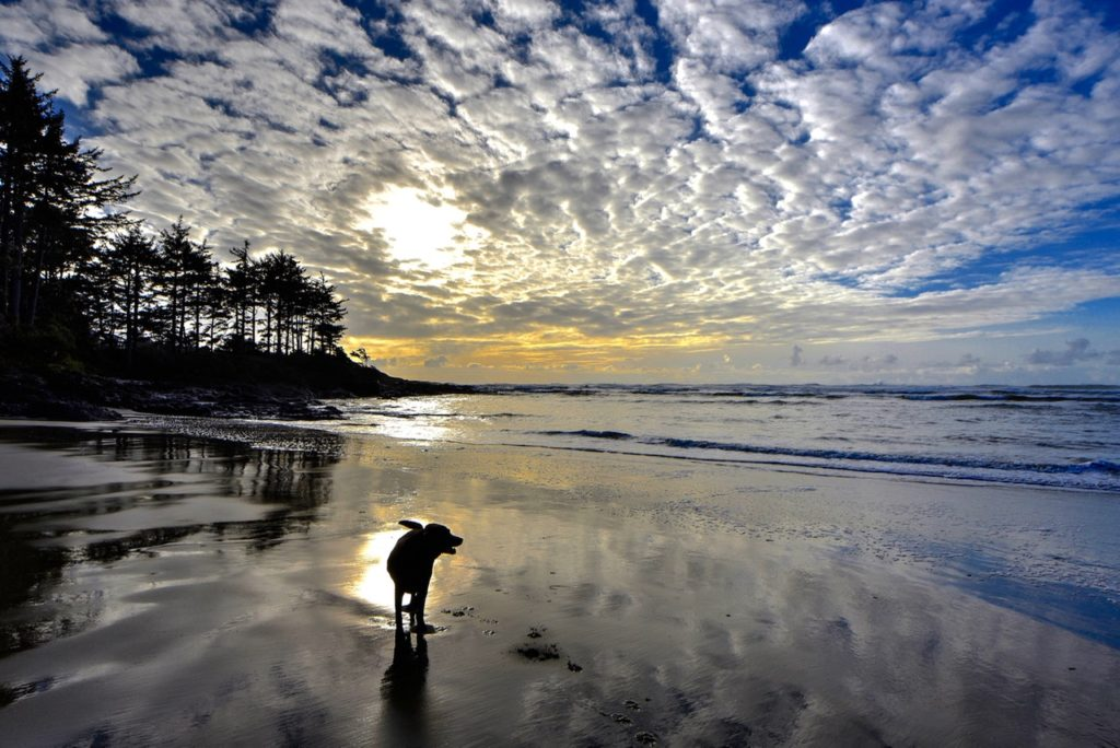 Doggie paradise...Molly in her element Ken Gagne