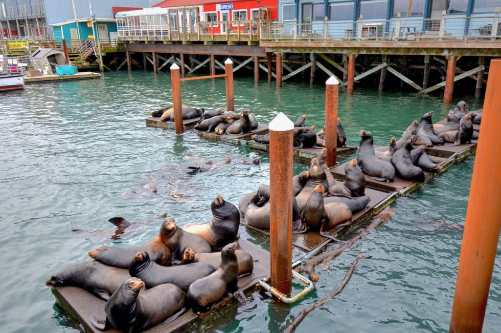 The sea lion lobby is very active in their hotel at Port Dock 5. Ken Gagne