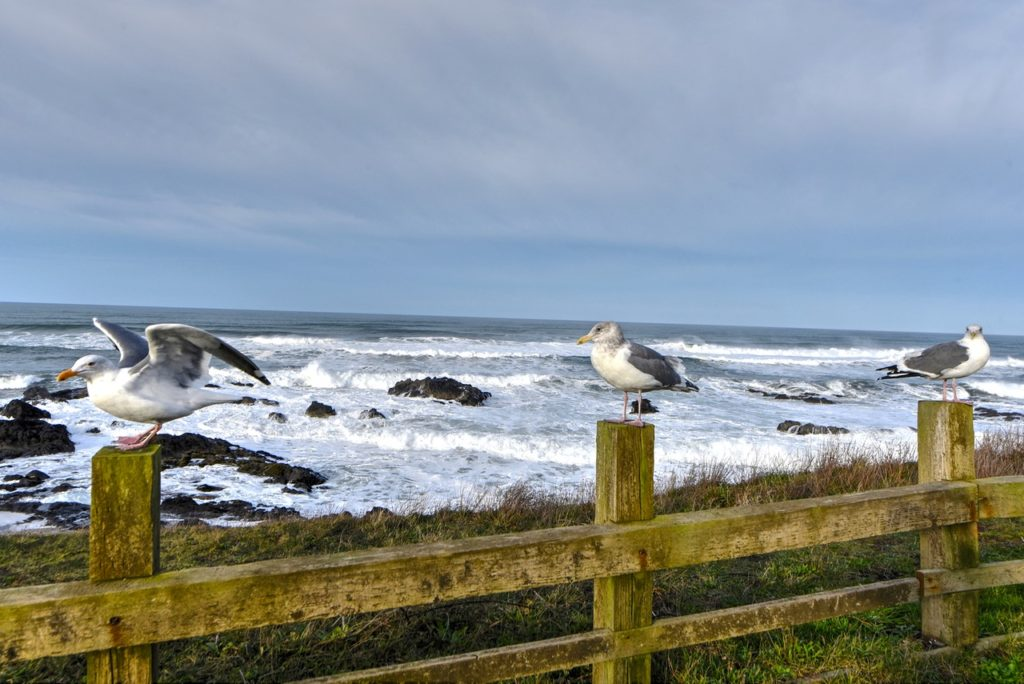 Jonathan L. Seagull preparing for take-off while others politely wait their turn. Ken Gagne