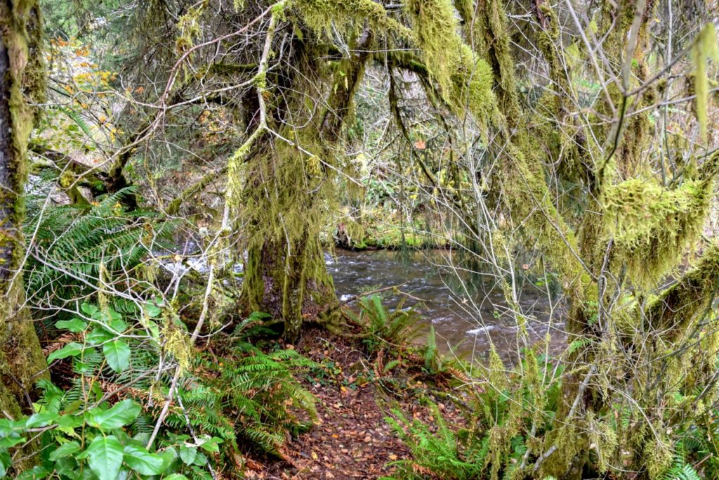 waldport mature personals Bend real estate - craigslist cl favorite this post apr 6 new on market five acre lot mature pine trees $60000 (waldport) pic.